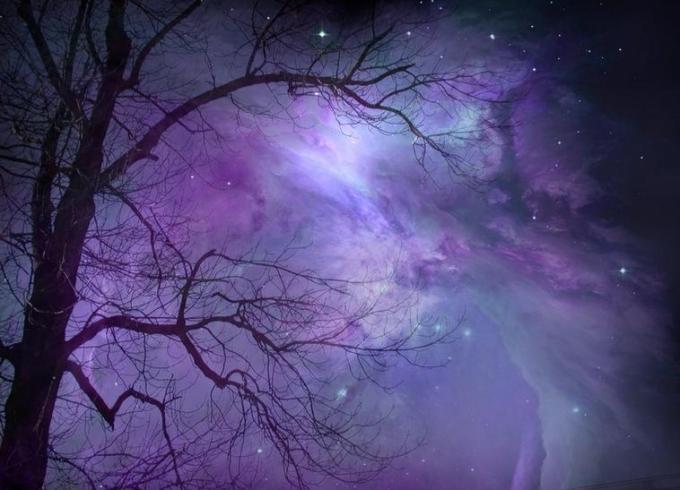 5h tree nebula