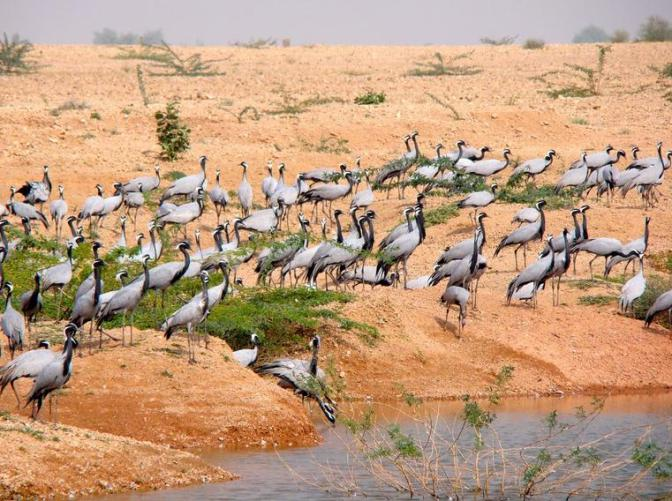 34e Gujarat Birds