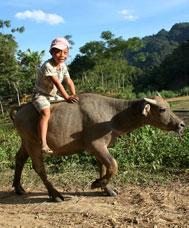 34n Riding a bullock
