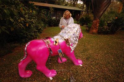 1 Pink lion Baraza