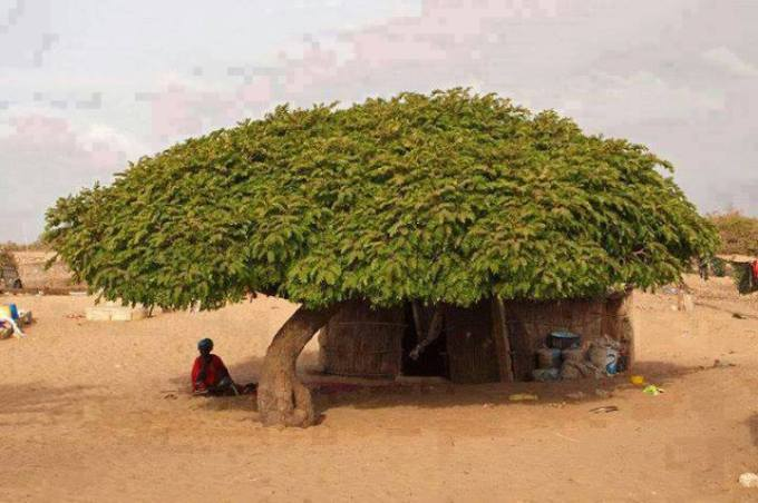 1 roof by tree