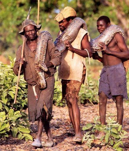 AfricanSnakeCatcher