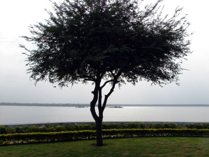 Tree-Osmansagar