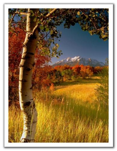 TreeMountain