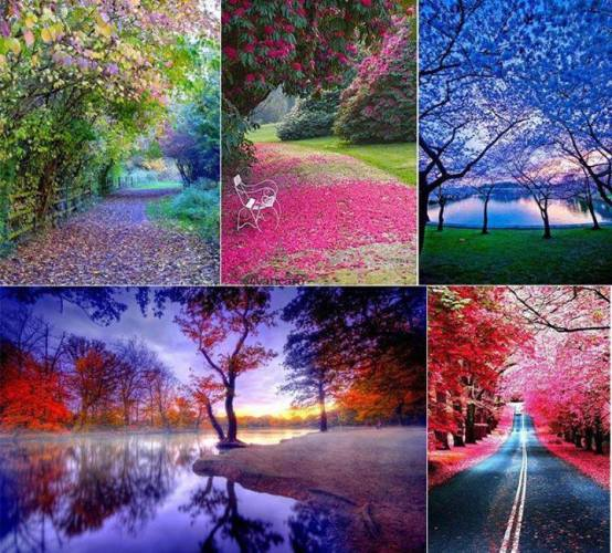 2 So many colours in Nature