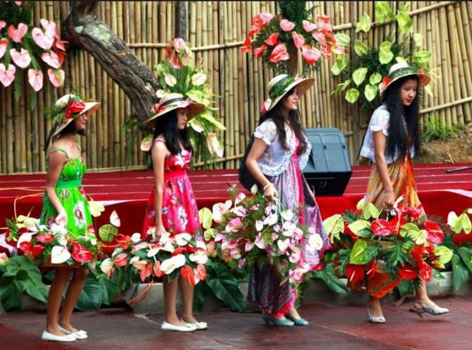 32g Anthurium festival Mizoram