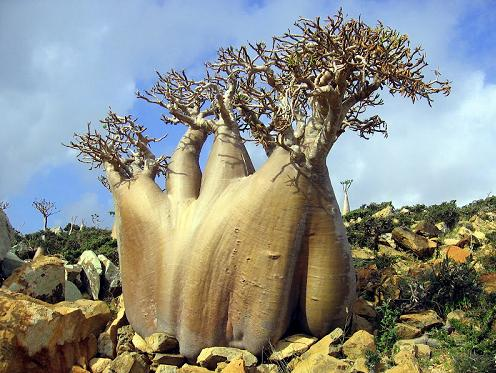 82a Strange tree