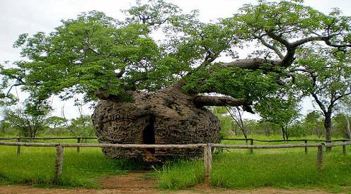 83a Strange tree