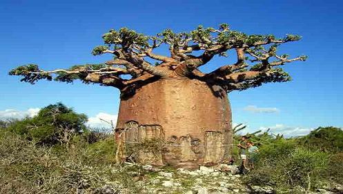 84a Strange tree