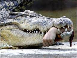 Hand in Crocodile
