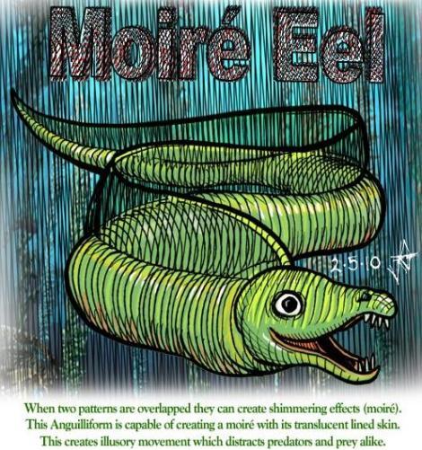 Moire Eel