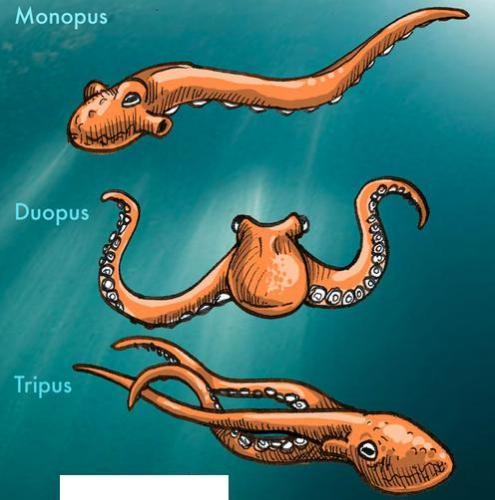 monopus