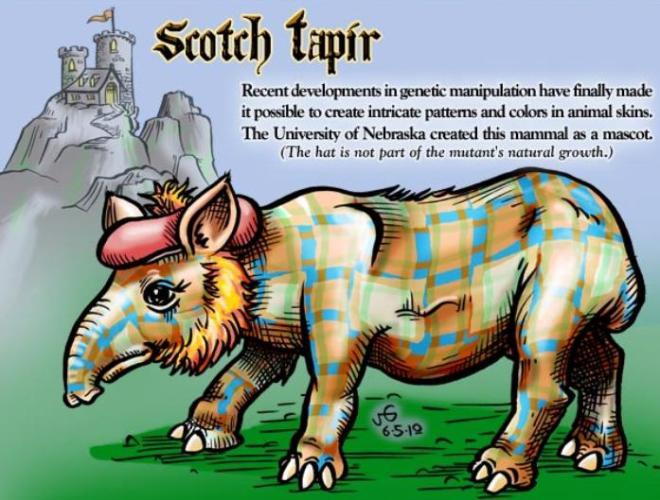 scotch Tapir