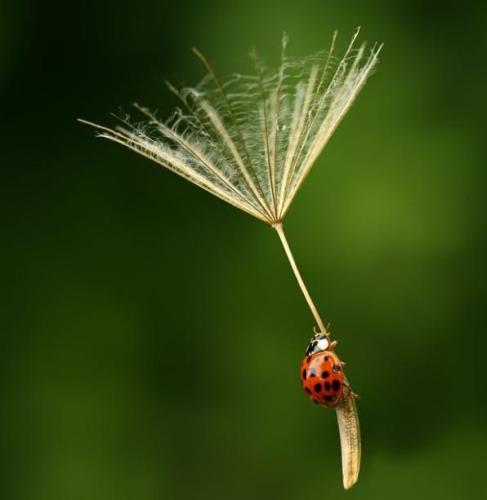 Parachute of bug