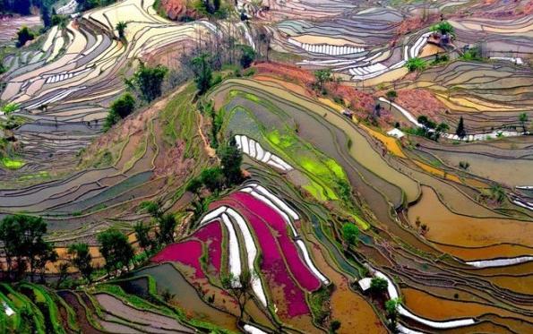 Pink Khet
