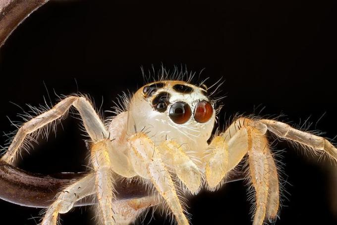 3 Jumping white spider