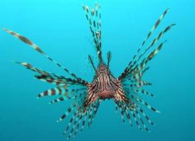 3 Spider fish