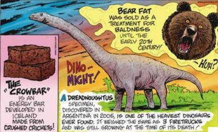 43 bear fat to treat baldness