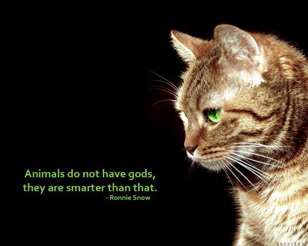 5 In some sense animals are smarter