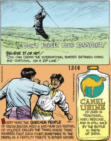 7 Camel urine as medicine