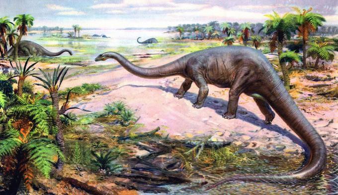 8 diplodocus