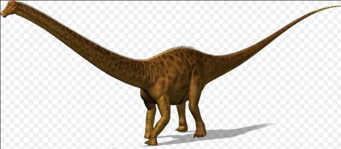 12 diplodocus