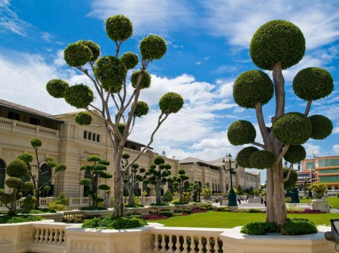 31b Spherical trees in a garden in Thailand