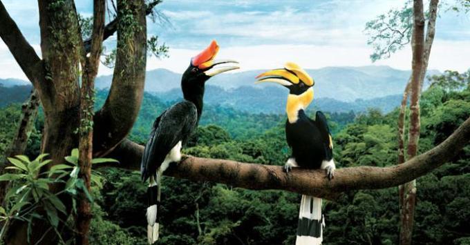 31e Two birds in Malaysia