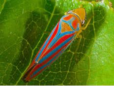72 Colourful bug