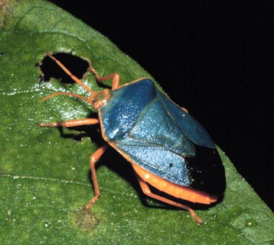 9 Belize arachnid bug insect