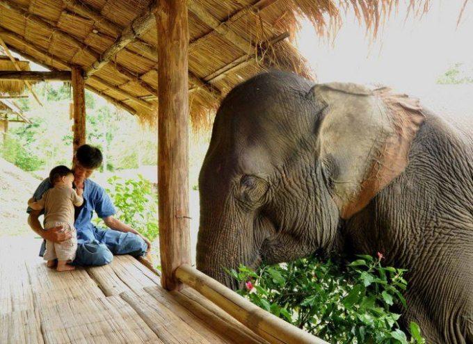 Bachchu seeing Elephant