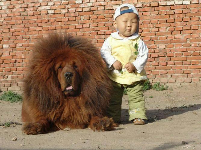 Big Dog small child