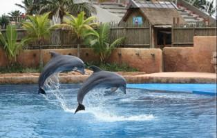 Duto Dolphin 2