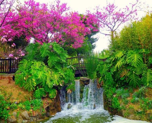 Garden Pink Green