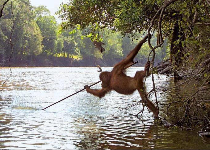 Monkey catching fish