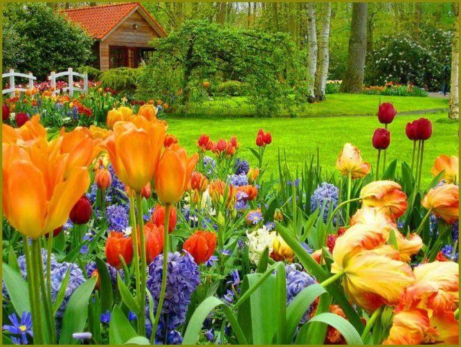 my garden u visited