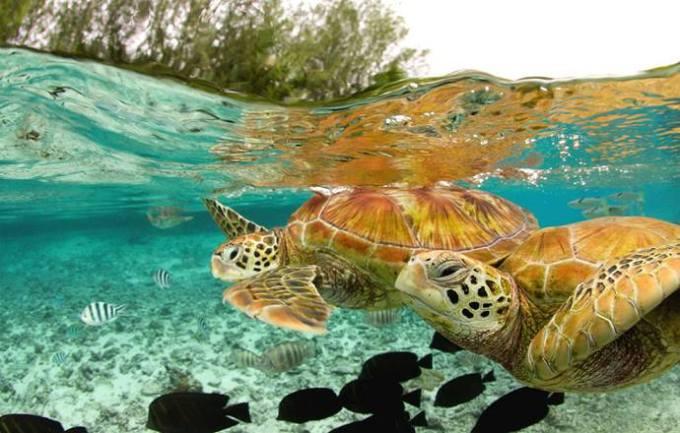 twin Tortoise