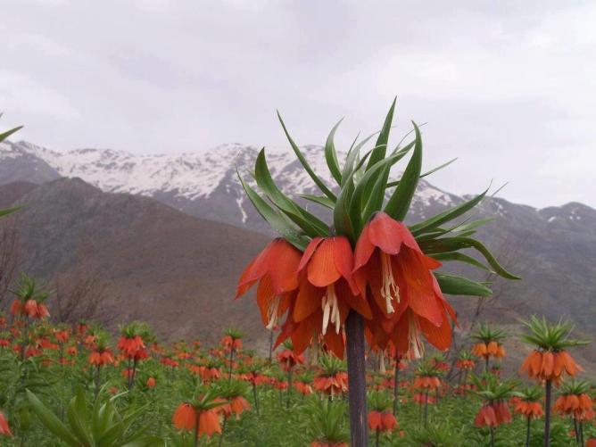 Ulto red flower