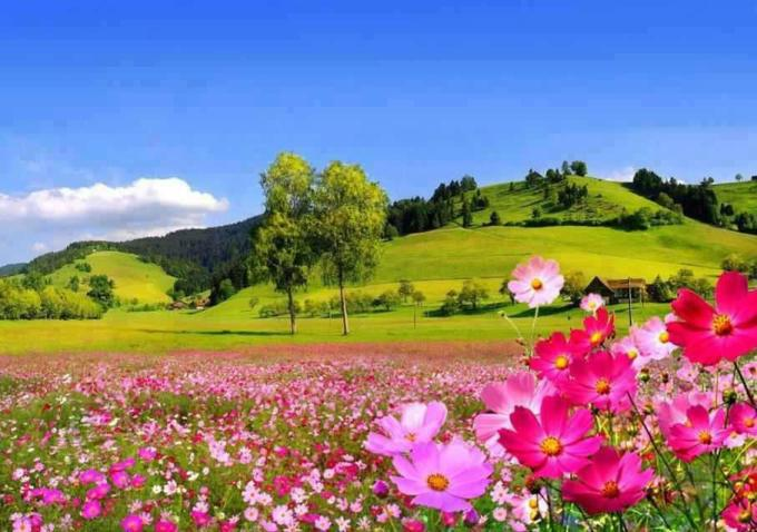 Valley of pink flowers