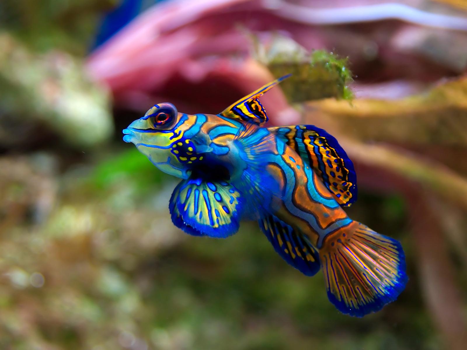 Fish aquarium in jayanagar - Z58