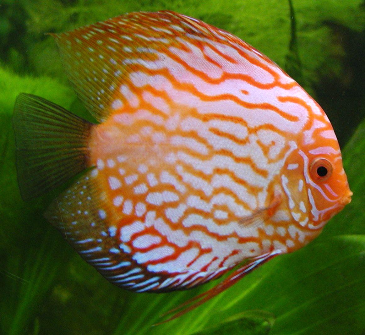 Fish aquarium in jayanagar - Iit Jee Center Of Mass Skmclasses Bangalore Subhashish Sir Skm Classes Bangalore