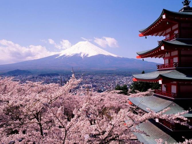9g Sakura cherry Fuji