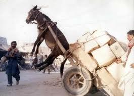 Donkey up