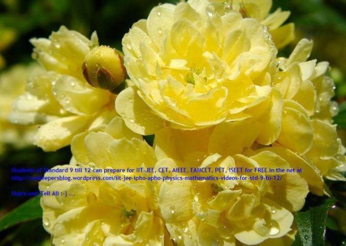 1 yellow flowers