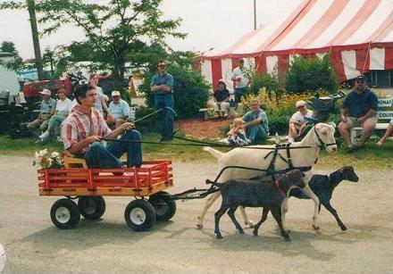 10e Goat cart