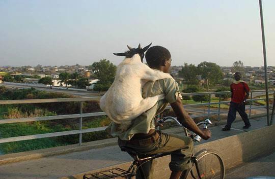 10f Goat ride