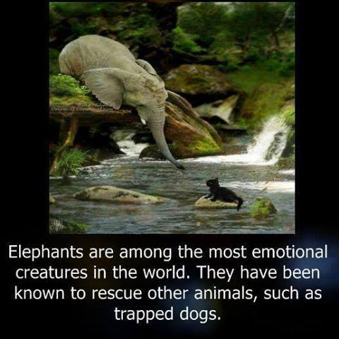 1j elephant saving dog
