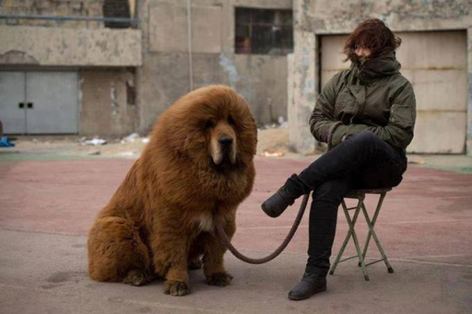 1v just like owner just like dog
