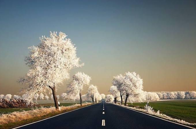 2g white trees black road