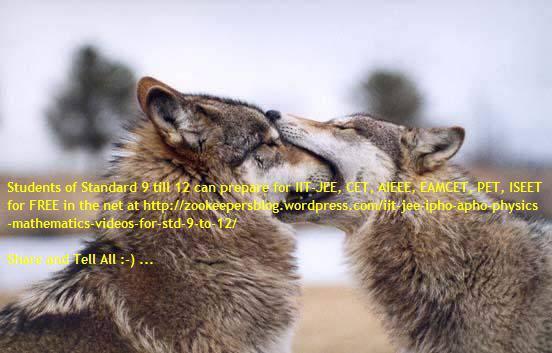 2v foxes